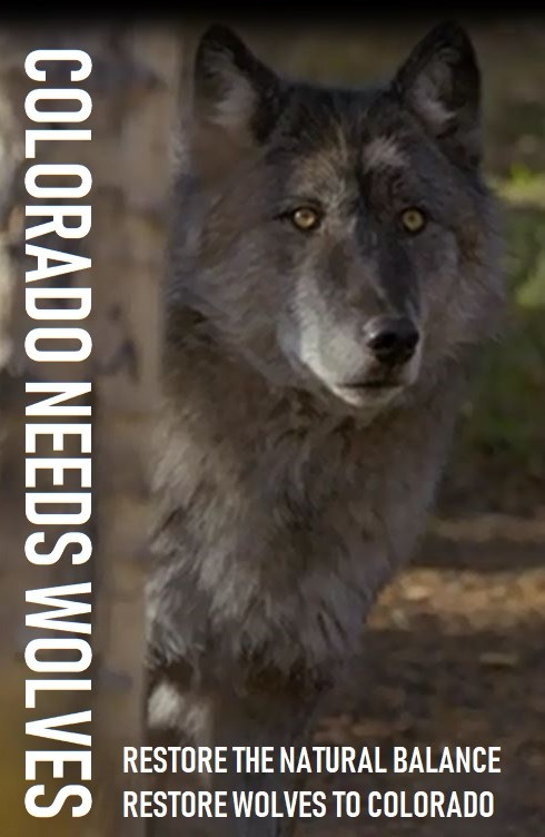 GRAY WOLVES slide show & short film May 13